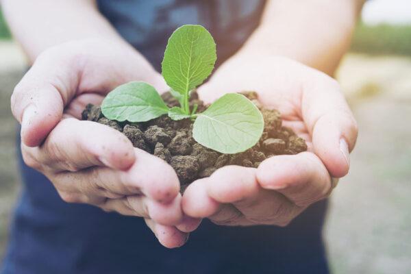 Mãos segurando uma pequena planta verde crescendo em solo marrom saudável